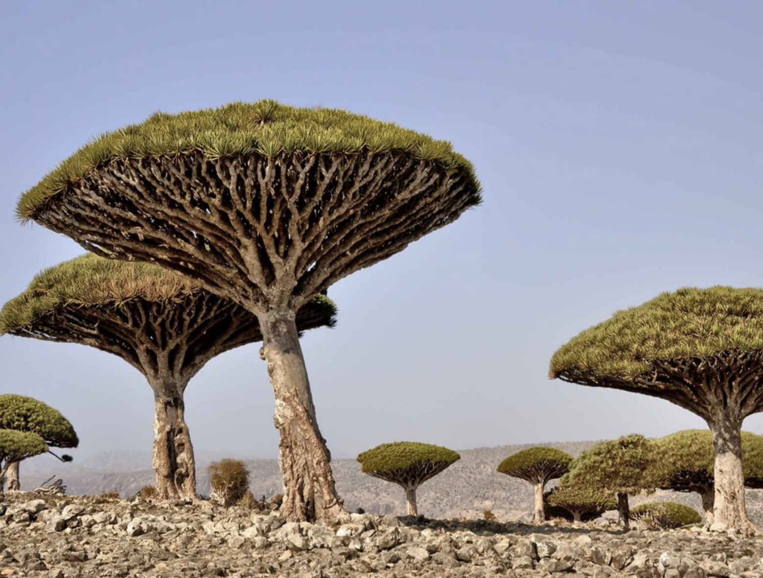UAE's $110m aid helps Socotra overcome challenges, dire conditions - News