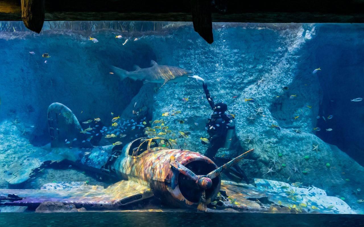 UAE: Region's largest aquarium to open in Abu Dhabi